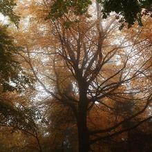 Bon week-end à tous 🍁  📸 hodonicky  #autumn #landscape #forest #autumncolors #menswear #mensfashion