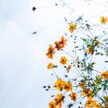 Belle semaine à vous 🌼  📸 @cipher   #menswear #mensfashion #nature #flower #lesgarconsfaciles #automn #yellowflower
